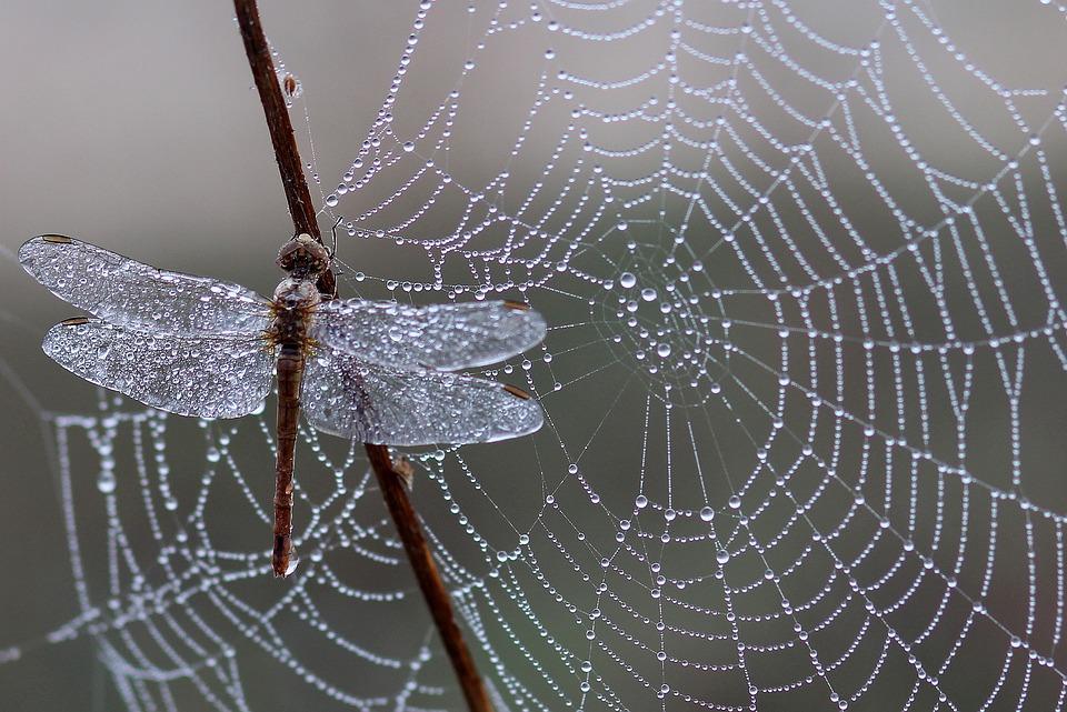 a linképítés olyan mint a pókháló