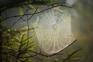 pókháló ahogy a linképítés folyamatára hasonlít
